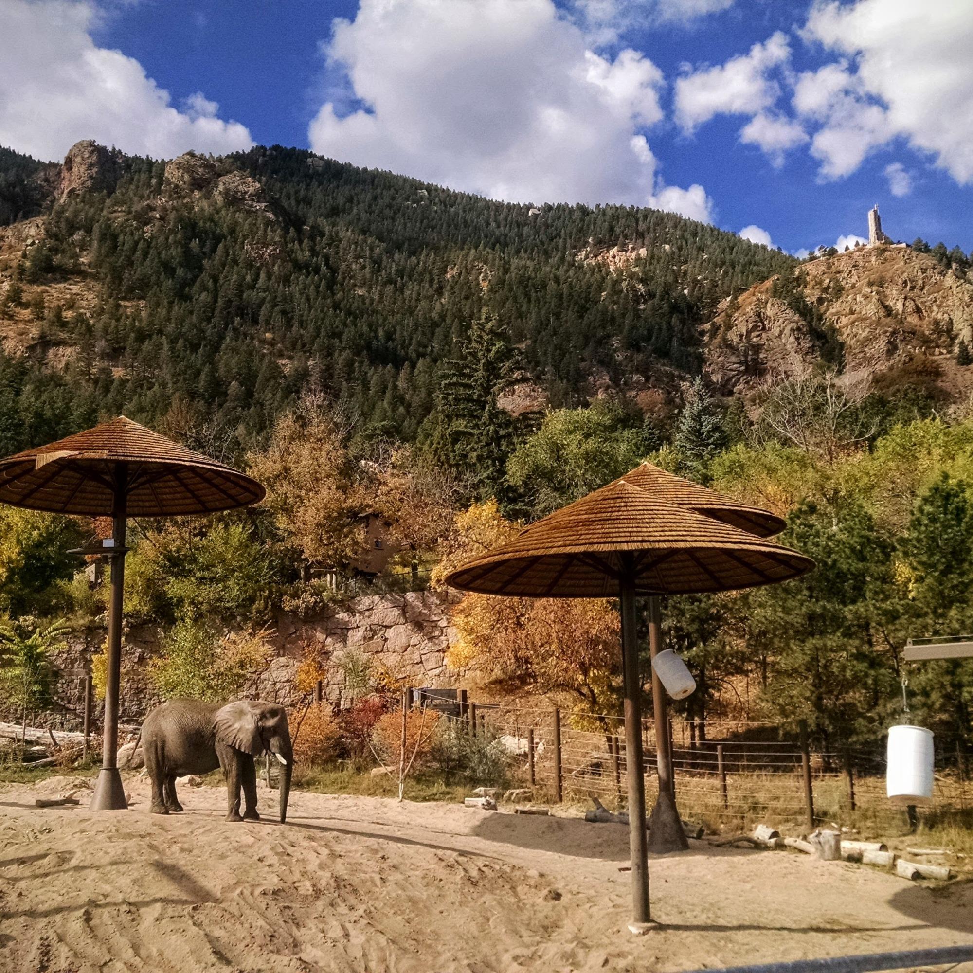 Elephant exhibit at Cheyenne Mountain Zoo