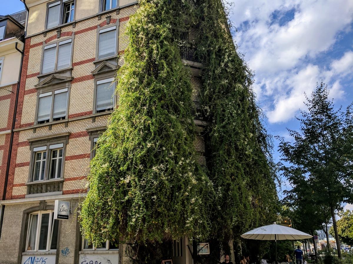 Kafi Dihei Zurich Switzerland